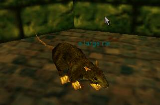 A beady eyed Everquest rat.